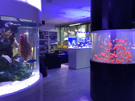 Red Sea Aquariums - Red Sea Aquariums - Saudi Arabia